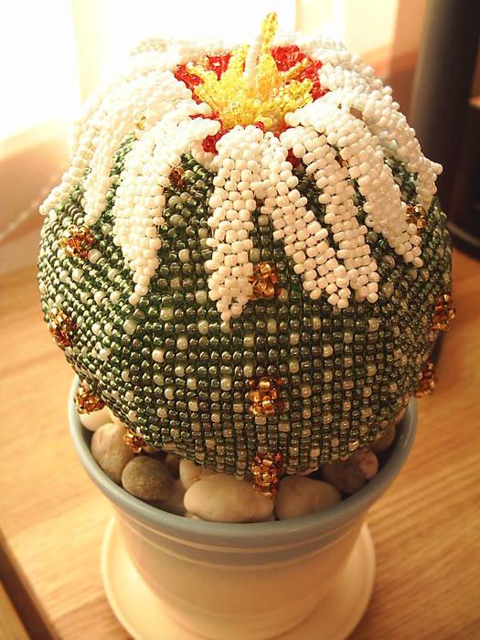 кактус. кактус астрофитум из