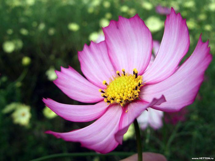 Цветы картинки с названиями 5