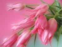 нежные цветы (200x150, 8Kb)