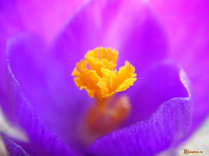 1267223854_flower-picture-yellow-interior-noah-bulgaria (700x525, 38Kb)