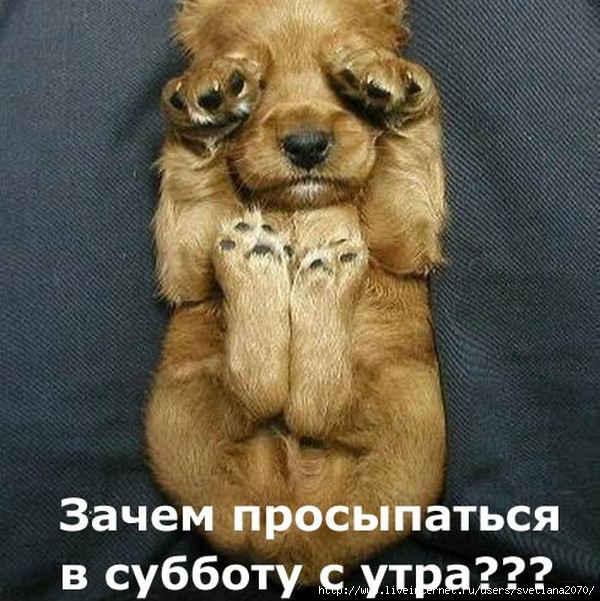 http://img1.liveinternet.ru/images/attach/c/2/74/728/74728143_33886103_tnCAGCLPJY.jpg