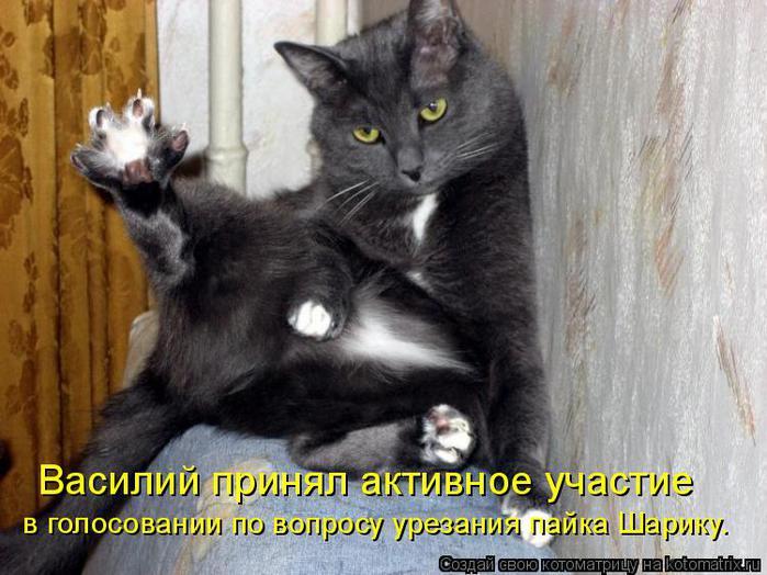 """Котоматрица: Наше кошачье  """"СТОП """" забывчивости покормить кошку!"""