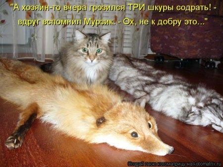 http://img1.liveinternet.ru/images/attach/c/2/74/740/74740593_4059800_matr15.jpg
