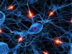 nerv (240x180, 21Kb)