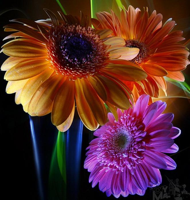 flower.8 (662x699, 155Kb)