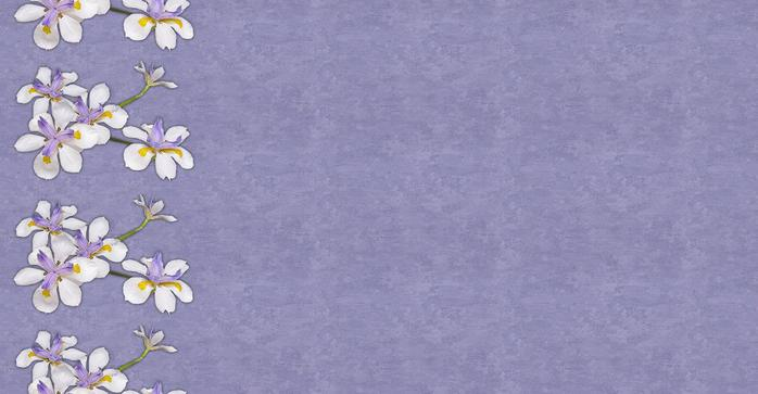 orhid01 (700x363, 32Kb)