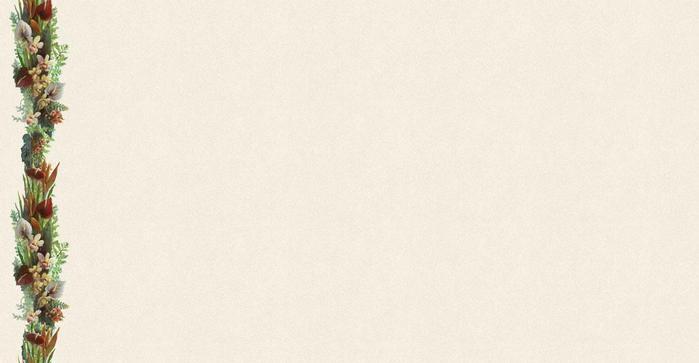 orhid23 (700x363, 17Kb)