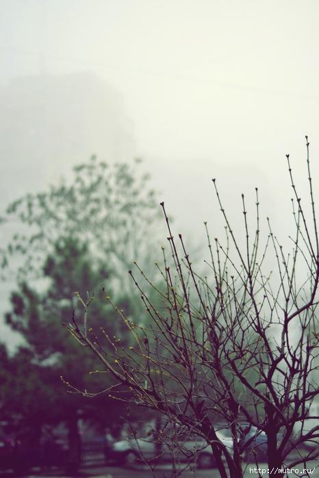 одесса в тумане,