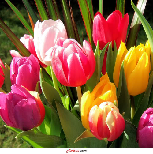 цветы (500x503, 59Kb)