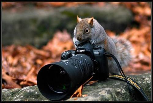 3911698_animalphotographers0 (500x337, 24Kb)
