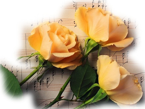 розы ноты.png (480x360, 44Kb)