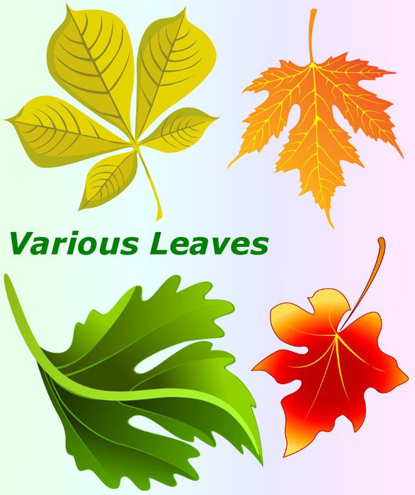 3291761_01Various_Leaves (586x700, 67Kb)