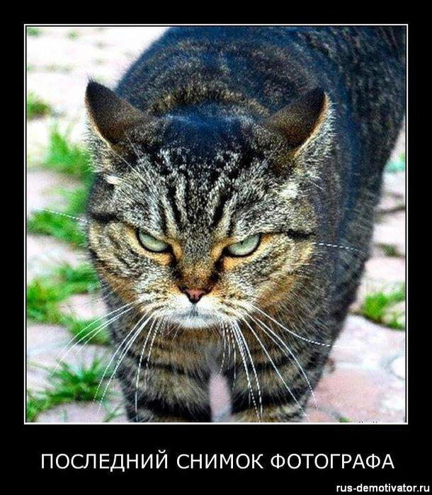 1320314093_posledniy-snimok-fotografa (610x700, 103Kb)