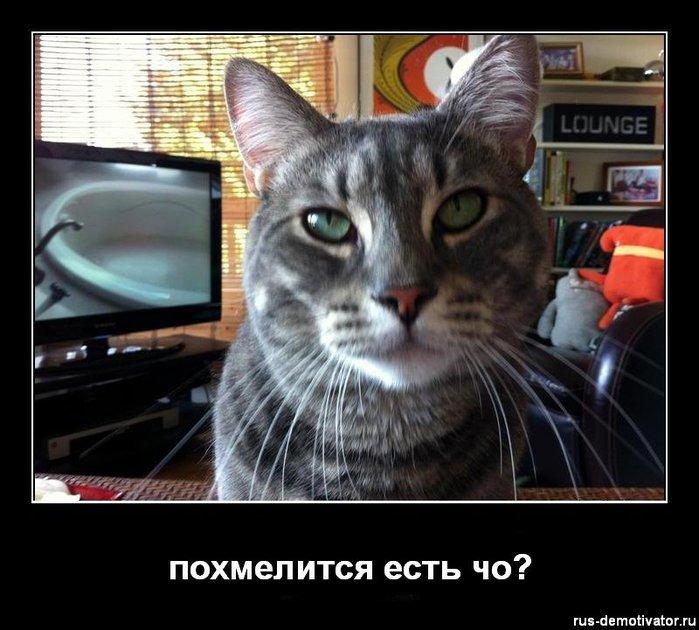 1326263179_pohmelitsya-est-cho (700x630, 79Kb)