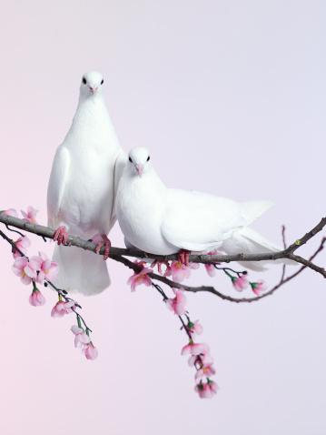 75_love_31 (359x478, 40Kb)