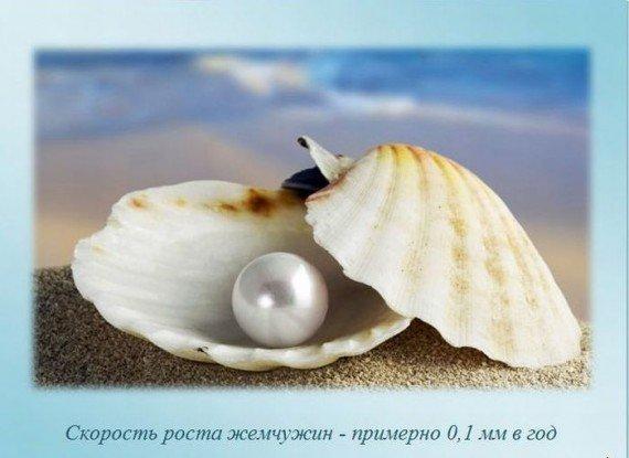 http://img1.liveinternet.ru/images/attach/c/2/82/903/82903203_large_i17.jpg