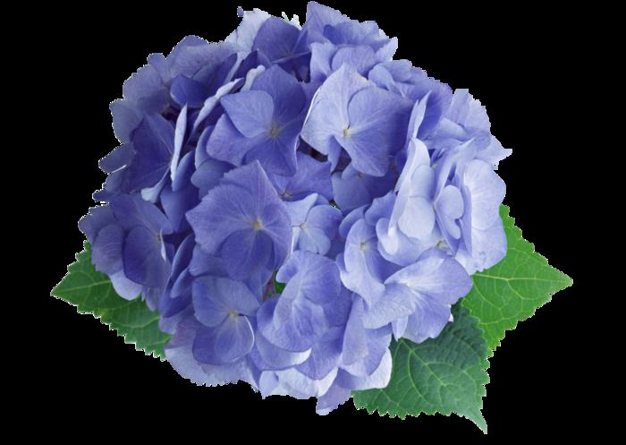 Цветок без фона картинка 4