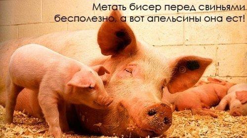 Интересные факты из жизни животных!