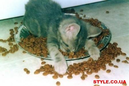 style.co_.ua-cats-5-450x300 (450x300, 35Kb)