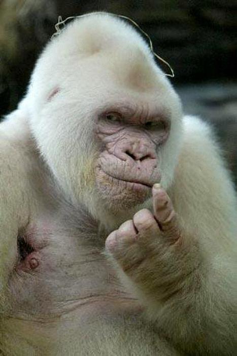 78260002_large_1224173211_albinosi12 (467x700, 434Kb)