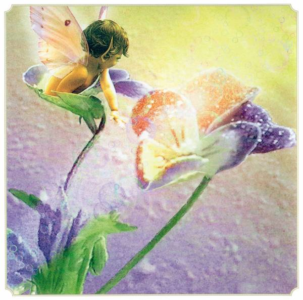 posterlux-cross_tom-kb_cross_tom_sp_pansy_fairy (600x593, 51Kb)