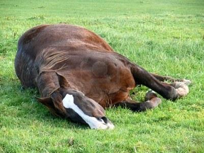 расслабленая лошадь (401x300, 47Kb)