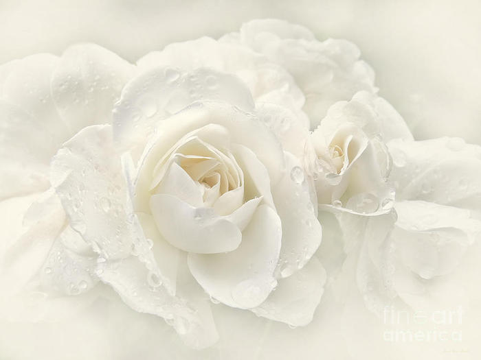 wedding-day-white-roses-jennie-marie-schell (700x525, 24Kb)