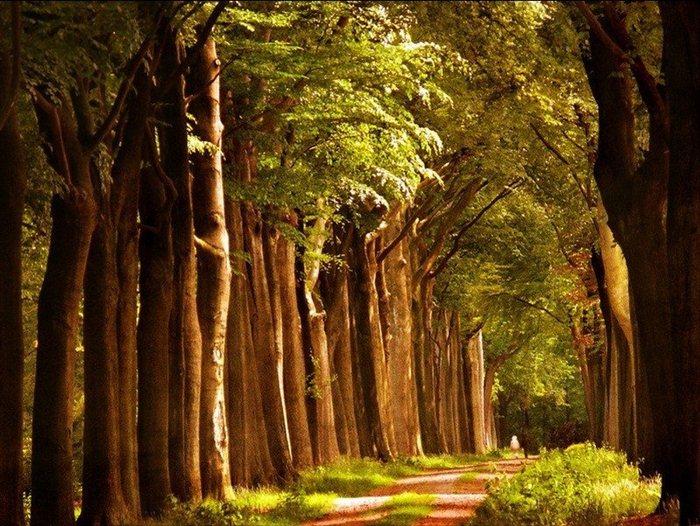 Волшебная красота природы 18 (700x526, 121Kb)
