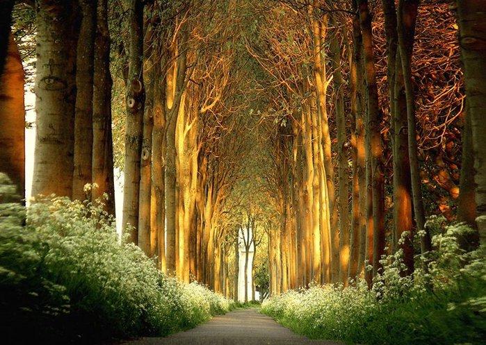 Волшебная красота природы 25 (700x497, 121Kb)