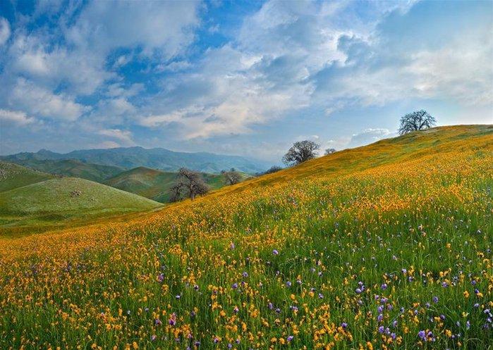 Волшебная красота природы 30 (700x497, 101Kb)
