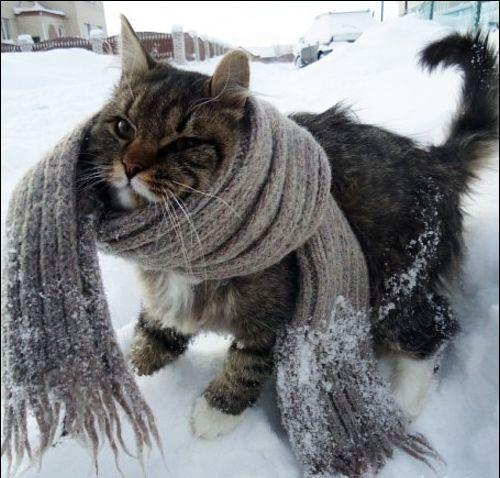 холодно (500x478, 46Kb)