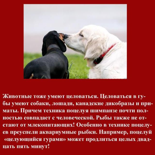 1327606691_kiss_070 (640x640, 227Kb)