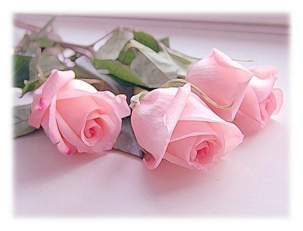 свете розы (600x458, 52Kb)