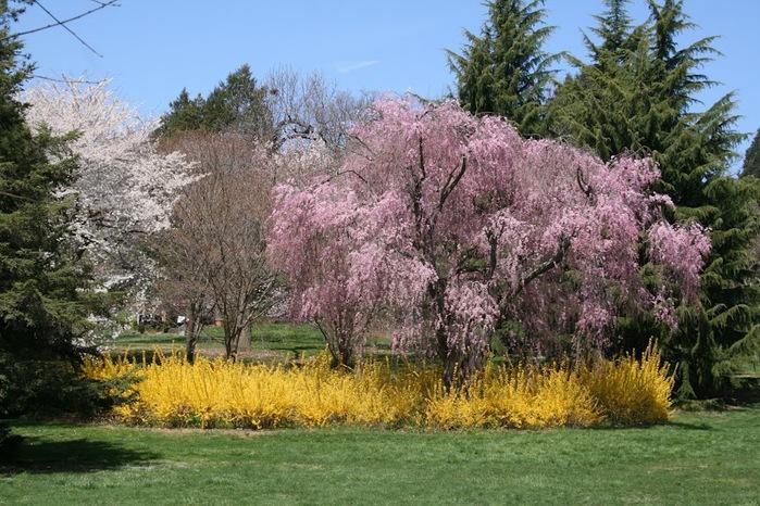 Общественный парк Morris Arboretum, Филадельфия 62336