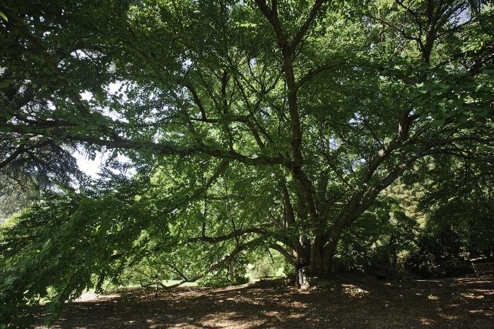 Общественный парк Morris Arboretum, Филадельфия 55242