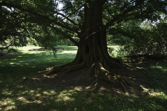 Общественный парк Morris Arboretum, Филадельфия 41762