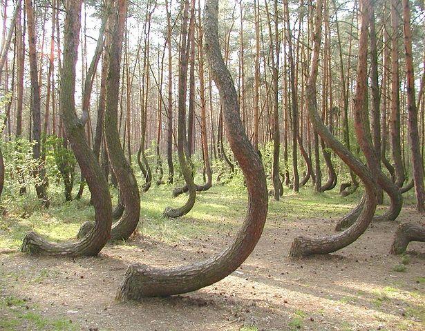strange forest (615x480, 111Kb)