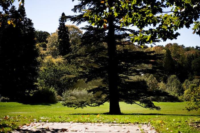 Общественный парк Morris Arboretum, Филадельфия 65254