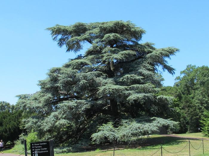 Общественный парк Morris Arboretum, Филадельфия 58486