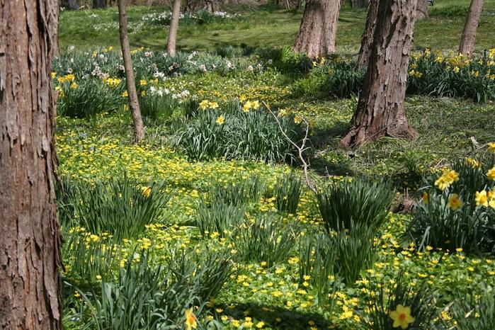 Общественный парк Morris Arboretum, Филадельфия 21878