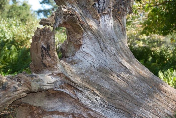 Общественный парк Morris Arboretum, Филадельфия 71911