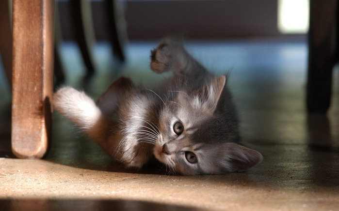 cats_cm_20120114_00207_002 (700x437, 46Kb)