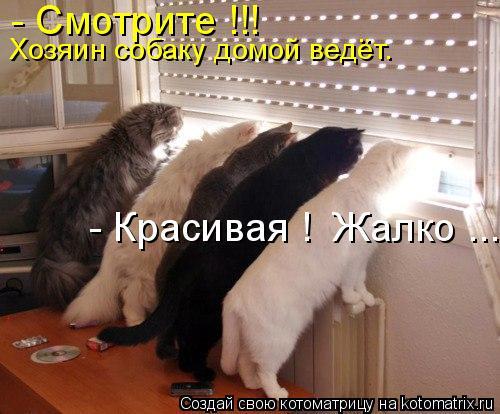 КОТОМАТРИЦА 6 (500x414, 44Kb)