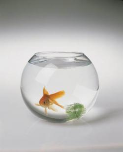 аквариум (250x310, 5Kb)