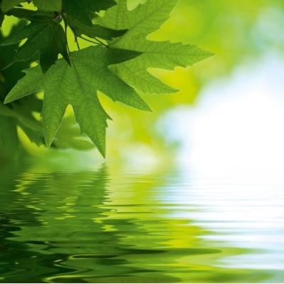 Свежие листья (340x340, 97Kb)