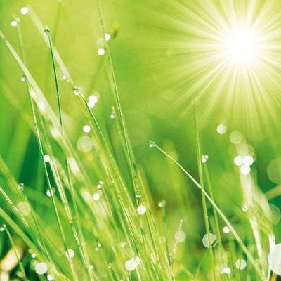 Сочная утренняя трава (340x340, 115Kb)