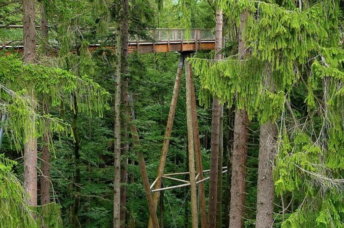 bavaria-treetop-walk-6 (700x463, 235Kb)