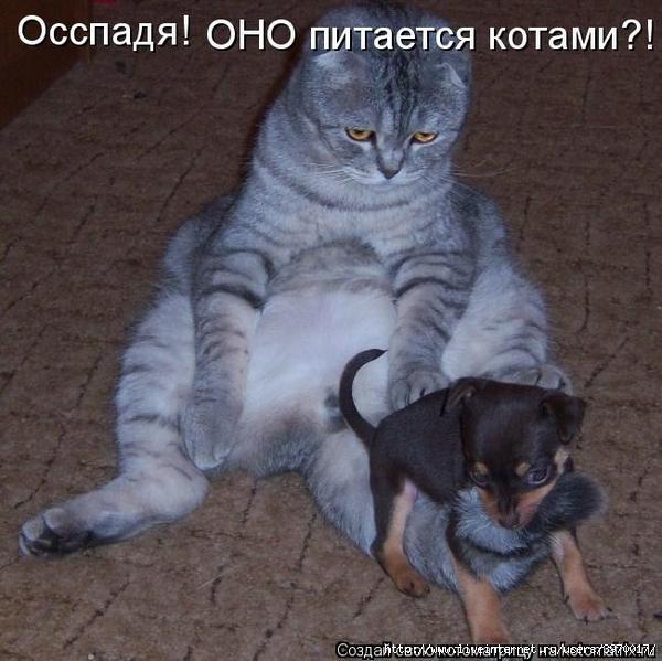 3970017_42685293_radionetplus_ru_zabavno_1002 (600x599, 156Kb)