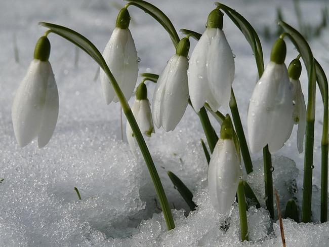 Любаша! Вот и пришла весна в