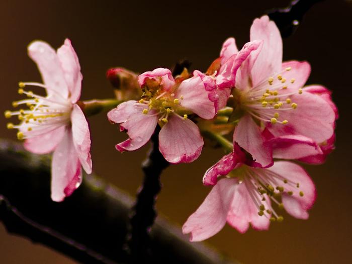 Картинки с большим разрешением цветы 8